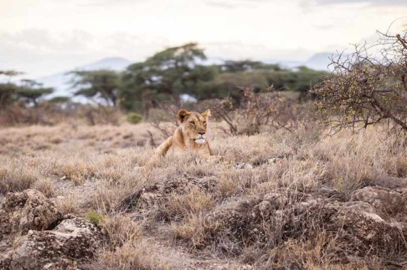 aslan fonu
