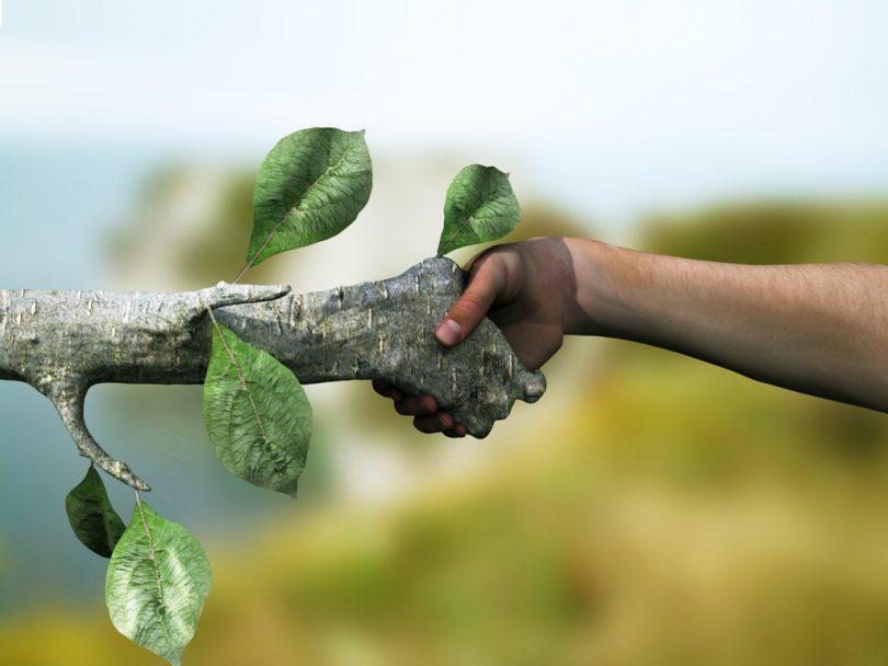 ekosistemde surdurulebilirlik