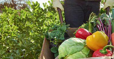 gıdada-sürdürülebilirlik