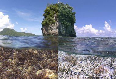 güneş kremi zararları mercan resifleri