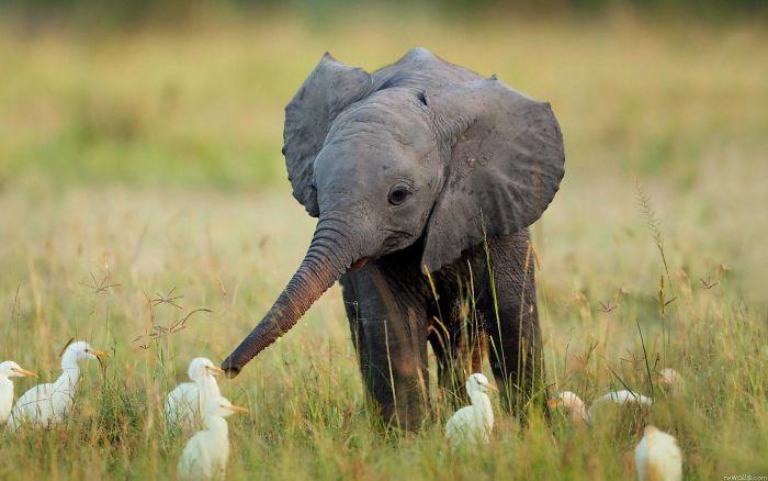 hello elephant