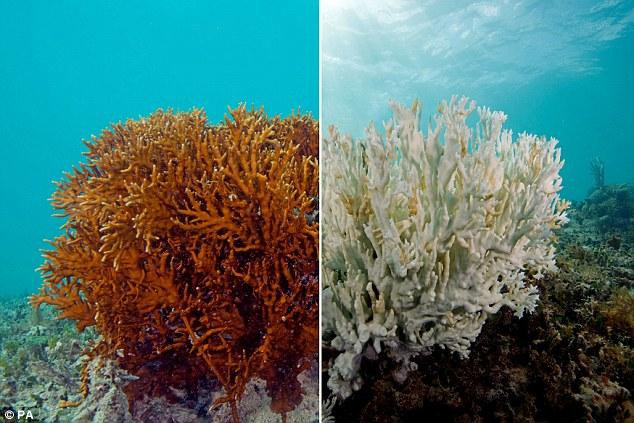 mercan resifleri güneş kremi