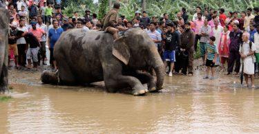 nepal filler