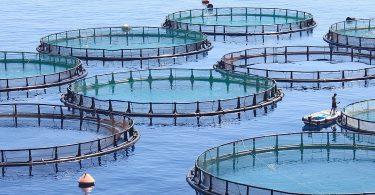 balık çiftliği mersin