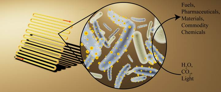 sayborg bakteri