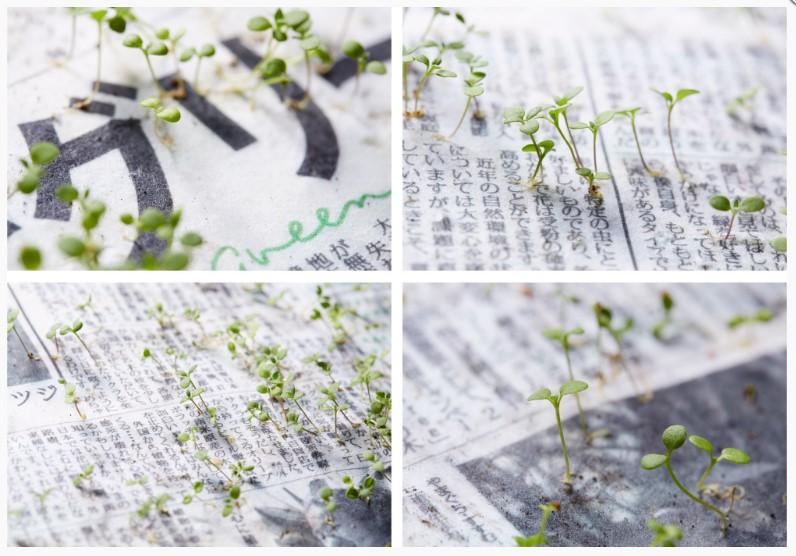 bitkiye dönüşen kağıt