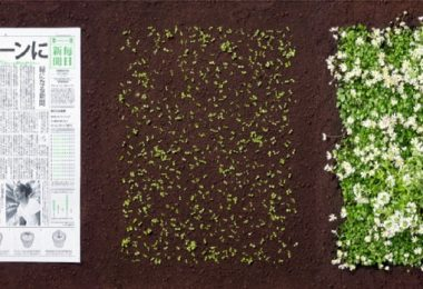 japonya bitkiye dönüşen gazete