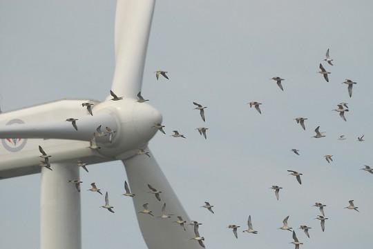 rüzgar enerjisi olumsuz yönleri
