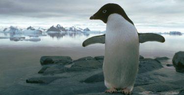 iklim değişikliği hayvanlara etkisi