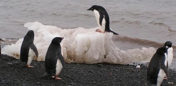 iklim değişikliği hayvanları nasıl etkiler