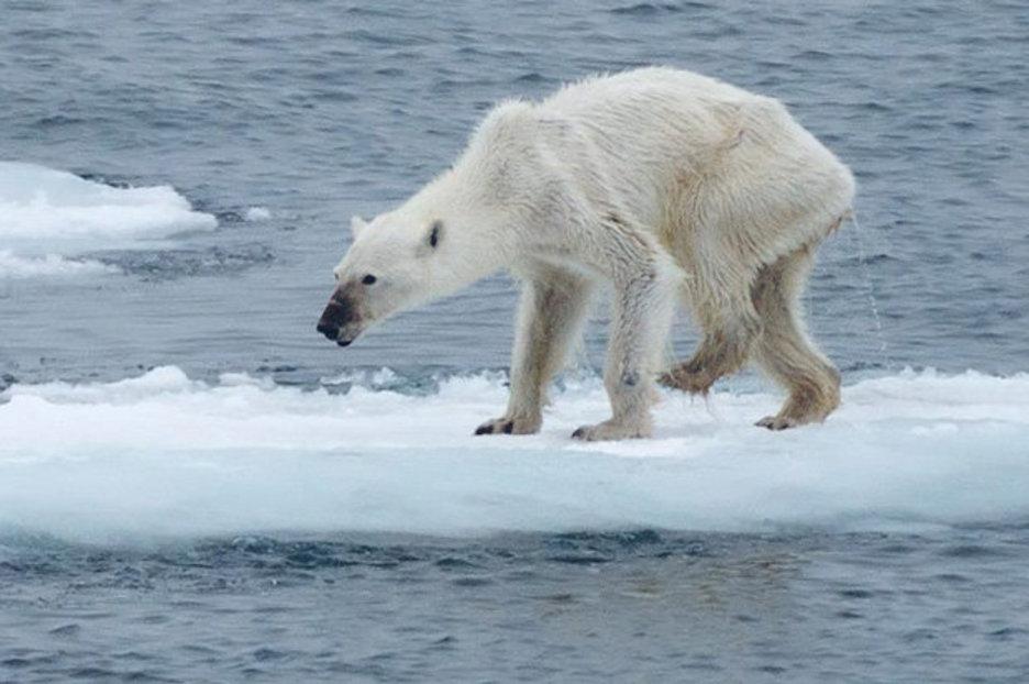 iklim değişikliğinin hayvanlar üzerindeki etkisi