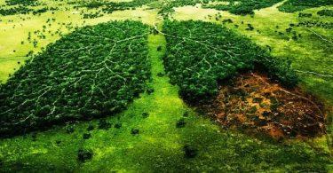 ormanları koruma