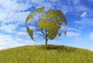 iklim değişikliği ormanlar
