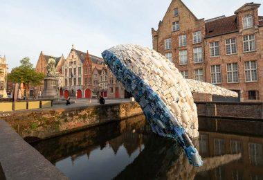 plastik atık balina