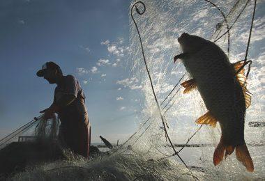balıklar tükeniyor
