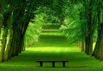 yeşil rüya