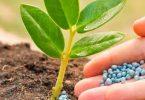bitki besinleri