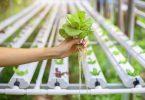 topraksız tarım sistemi ortamları