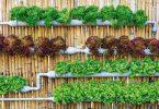 topraksız tarım sistemleri