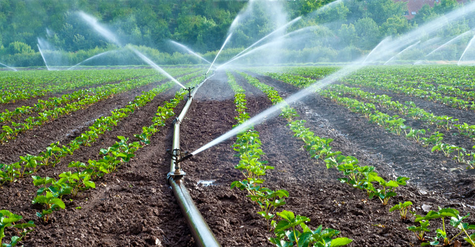 sürdürülebilir tarım nedir