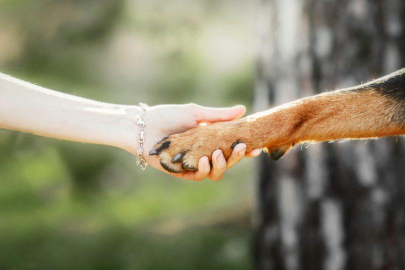 hayvanlara yönelik sosyal sorumluluk projeleri